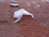 zanieczyszenia i ekologia gruntów